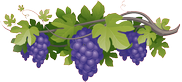 vigne-ramatuelle-gite-chambre-hote-st-tropez-red
